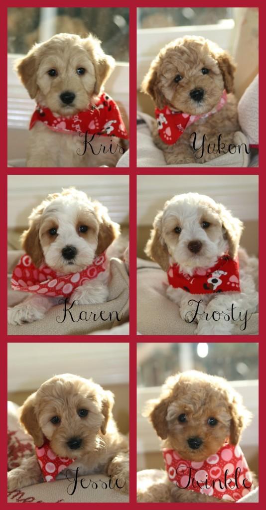 7 weeks valentine collage
