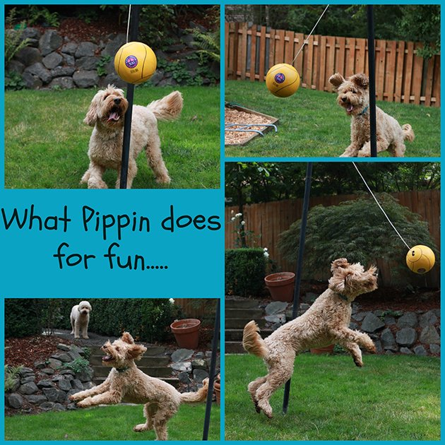 Pippin tetherball