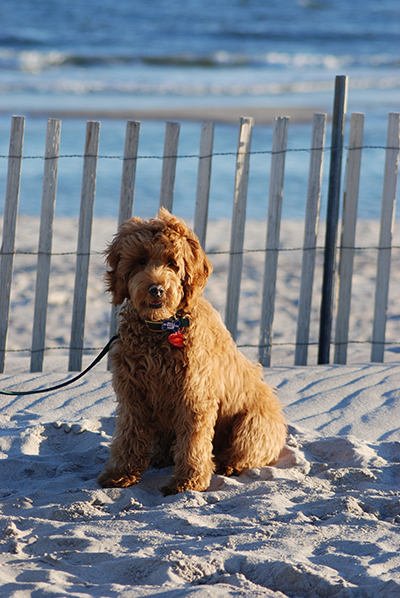 Bailey at the beach